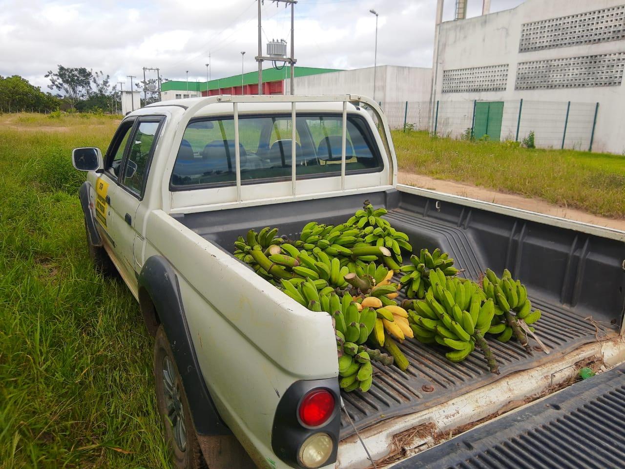 Produtos da fazenda são doados à comunidade